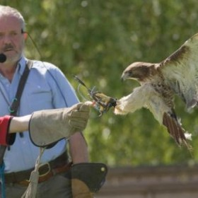 Foraging and flying, fishing and falconry