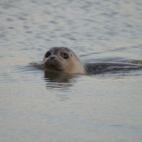 Seals, sailing and smiling faces