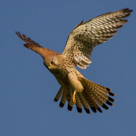Rare birds, buzzards and barn owls