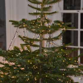 Christmas at The Moult
