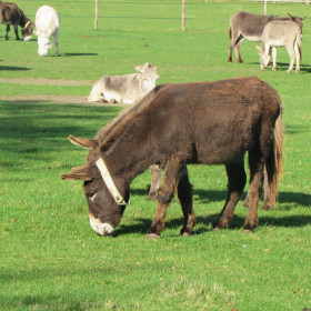 Donkeys, trains and brands