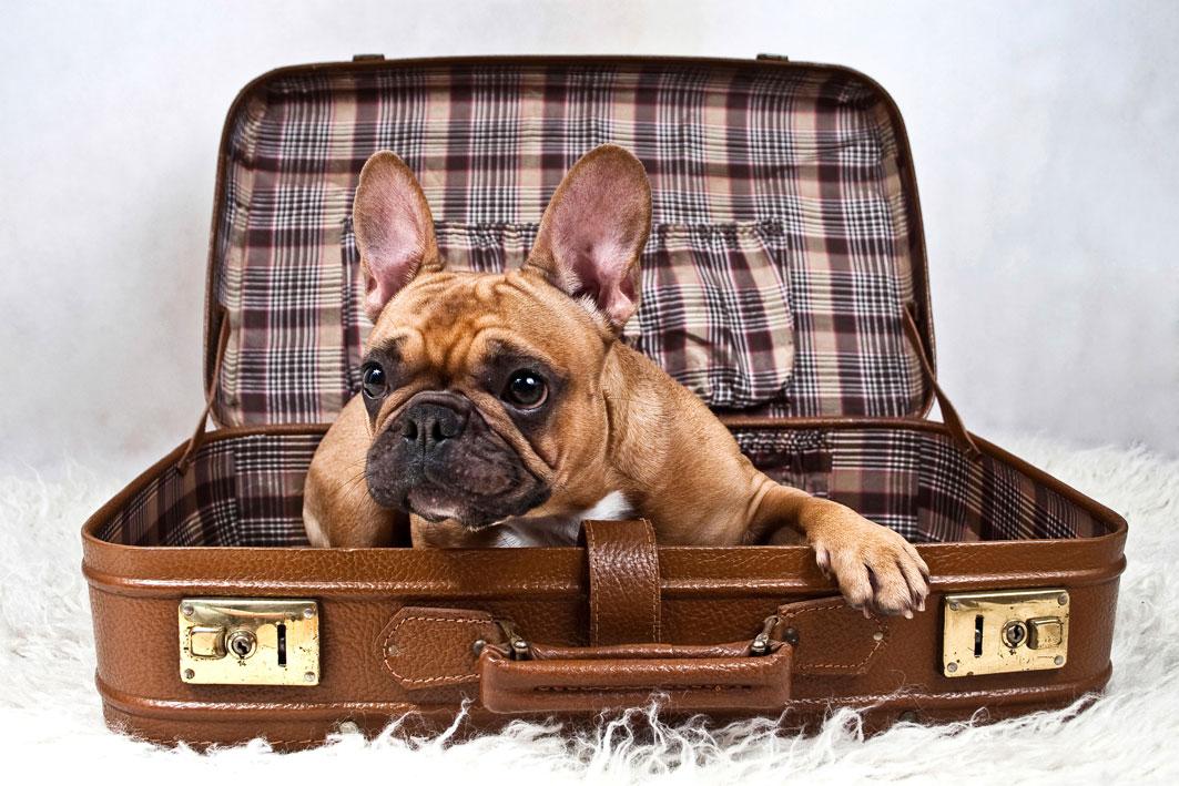 Сколько можно заработать, взяв животное на передержку, пока хозяева в отпуске