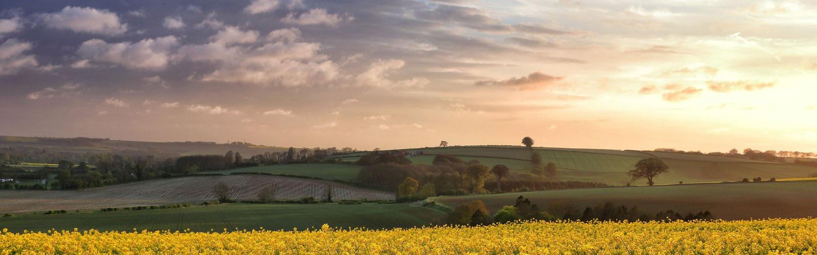 Lincolnshire field.