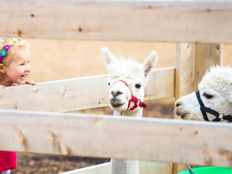Young girl enjoying an animal farm.