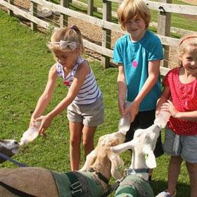 family friendly farm with kids feeding goats.