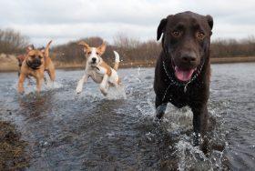 Dogs having fun in the water.