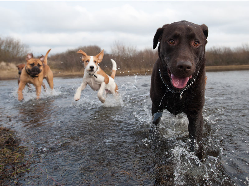 Dogs having fun in the water.