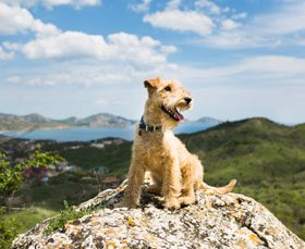 Top locations for you and your pooch