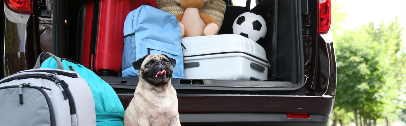 Luxury dog friendly cottages