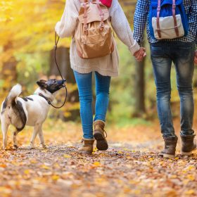 Family-friendly, dog-friendly and more