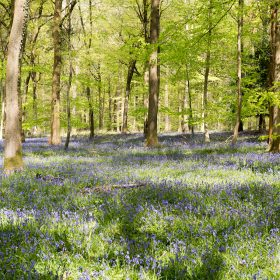 The best locations for forest holidays