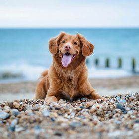 Pet-friendly cottages in the UK